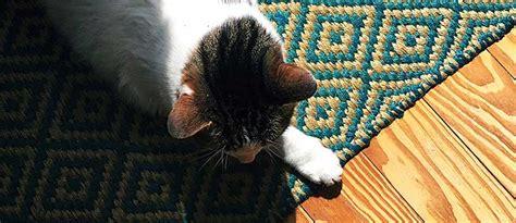 Haare Aus Teppich Entfernen by 5 Beste Hausmittel Um Katzenhaare Zu Entfernen Tierisch