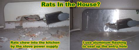 Mice In Walls And Ceiling by Rat Entry Holes Into House Common Rat Entry Points