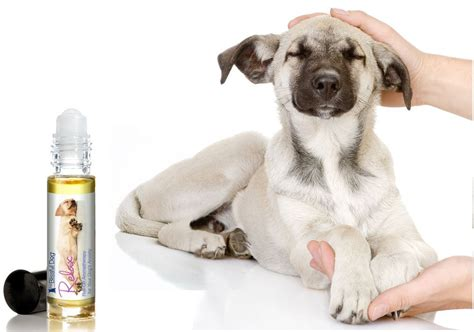 aromatherapy for dogs relax roll on aromatherapy for dogs
