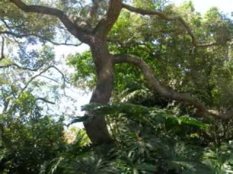 Garden Aiea by Foster Botanical Garden Honolulu Hawaii