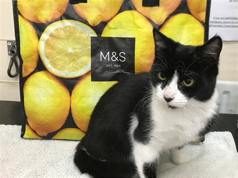 Cat Calendar 2018 Marks And Spencer Dumped Cat Found Zipped Up In A Freezer Bag Itv
