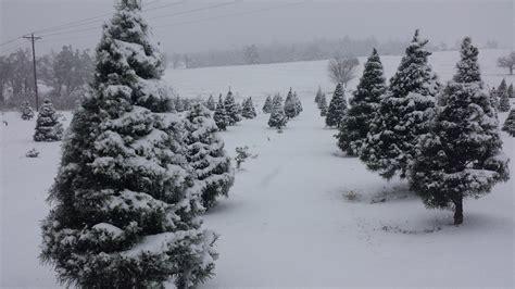 snowy christmas tree farm www imgkid com the image kid
