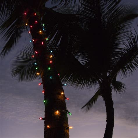 professional christmas light hangers solana beach d tek