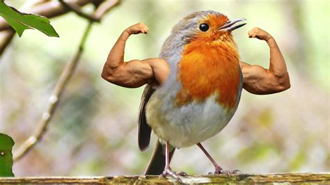 a bird with massive arms birdswitharms