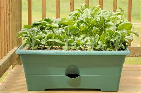 winter indoor garden indoor winter gardening tips corner