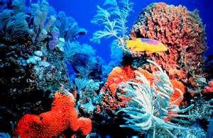 Lighting Stores Phoenix Coral Reef In The Bahamas Successful Reef Keeping