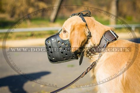 golden retriever muzzle golden retriever muzzle for biting leather muzzle 163 47 50