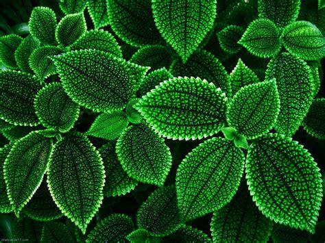 Code Name Verdi green flower wallpaper wallpapersafari