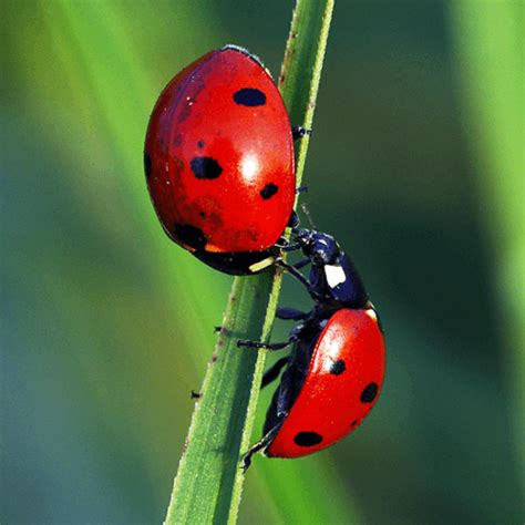 how to get rid of ladybugs in the house search results for mosquito repellent how to get rid of stuff