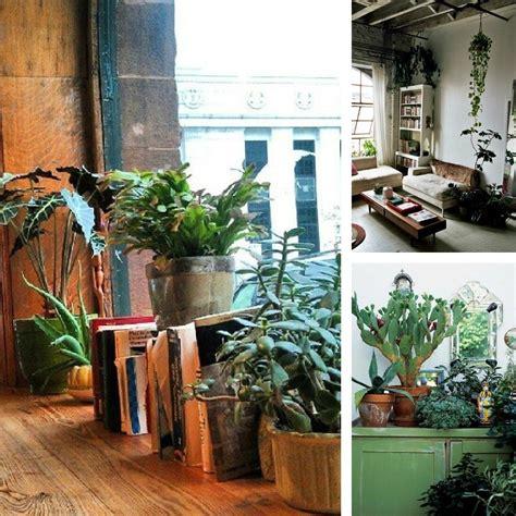 decorating dilemma house plants decorators notebook