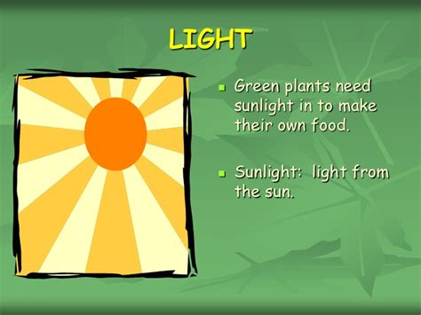 plants that need no light chapter 2 what do plants need to grow