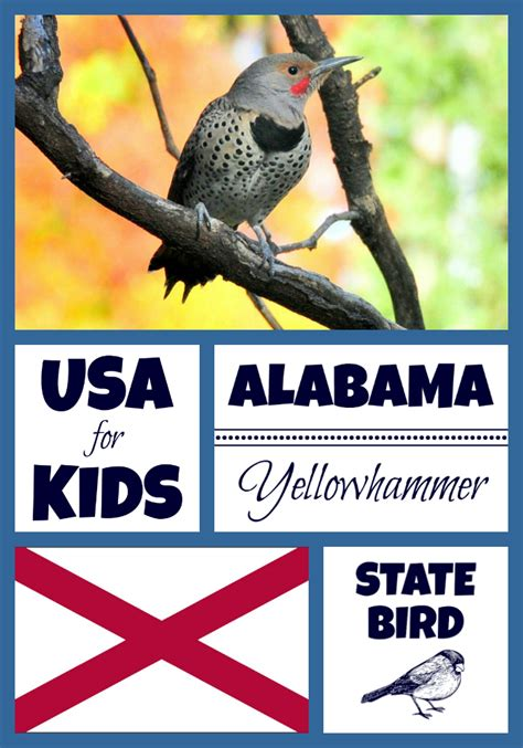 alabama state bird northern flicker by usa facts for kids