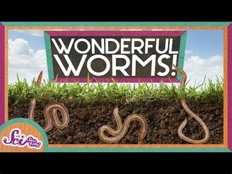 Culturing Black Worms Breeding Housing Black Worms Lo