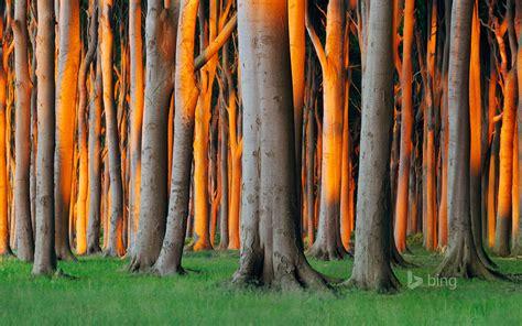 nienhagen wood alemanha nienhagen wood in mecklenburg vorpommern germany