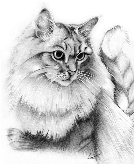 imagenes para dibujar a lapiz carboncillo imagenes para dibujar gatos a lapiz dibujos de gatos