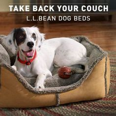 llbean dog bed take back your couch l l bean dog beds