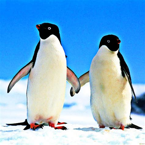 google images penguins penguin friendly seo a business guide to recovering from