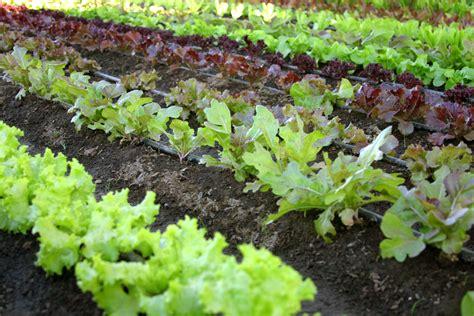About Organics The Organic Council Of Ontario Garden Vegetables