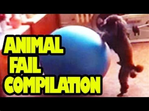 funny animals  animal fail compilation  youtube
