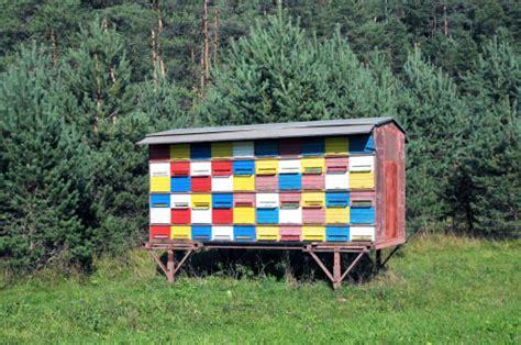 slovenian mobile beehouse branko habjah honey bee suite