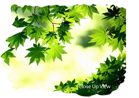 Wall Sticker Green Maple Leaves Ay 9145 Uk 60 Cm X 90 Cm green maple leaves flowers canvas stretched canvas