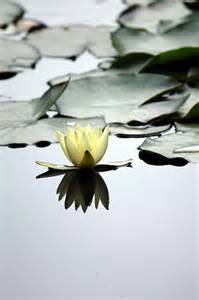Lotus Gardens Postal Code Water Flickr Photo