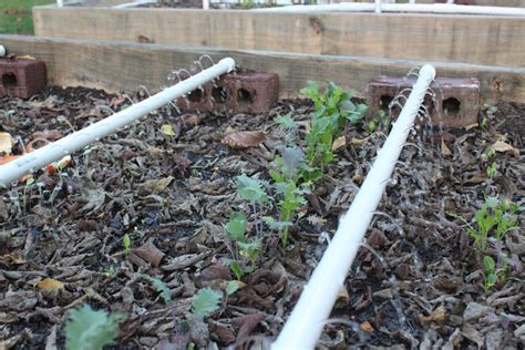 raised bed irrigation irrigation for raised bed gardening modern homemakers