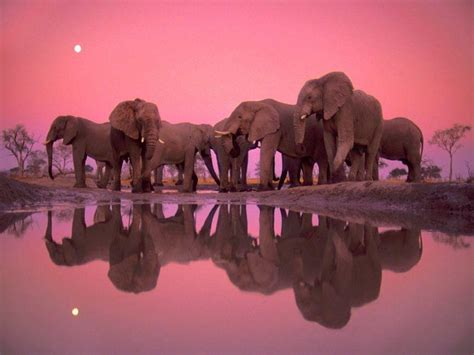 pink elephant wallpaper elephant wallpapers wallpaper cave