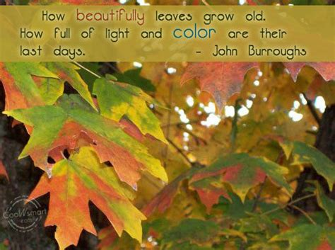 quotes about fall colors quotesgram autumn sayings funny quotes quotesgram