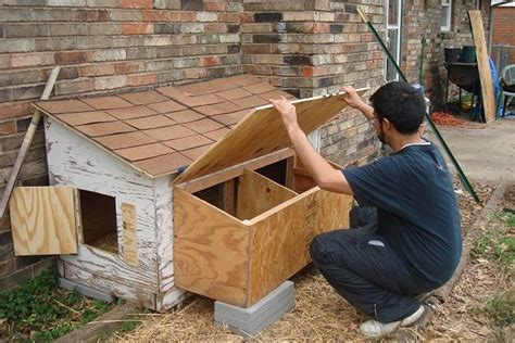 the dog house tulsa tulsa area cluckers backyard chickens