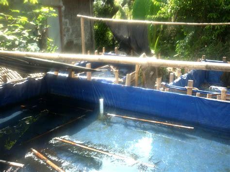 kolam terpal pemijahan lele uk 3 x 4 m tinggi 60 cm
