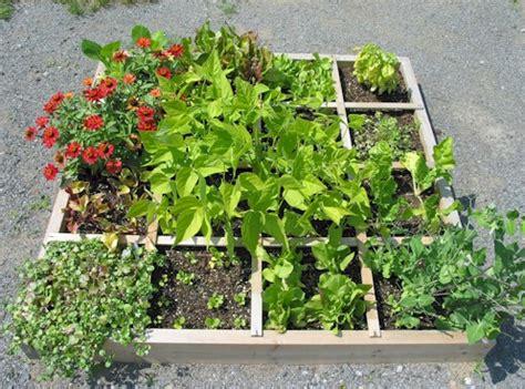 google basic gardening splendour of square foot gardening alert live it up vegan container gardening