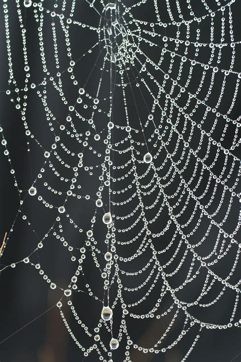 web on file spider web necklace with pearls of dew jpg