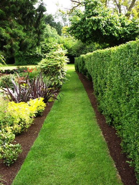 10 plants for an irish hedge peter donegan landscaping dublin