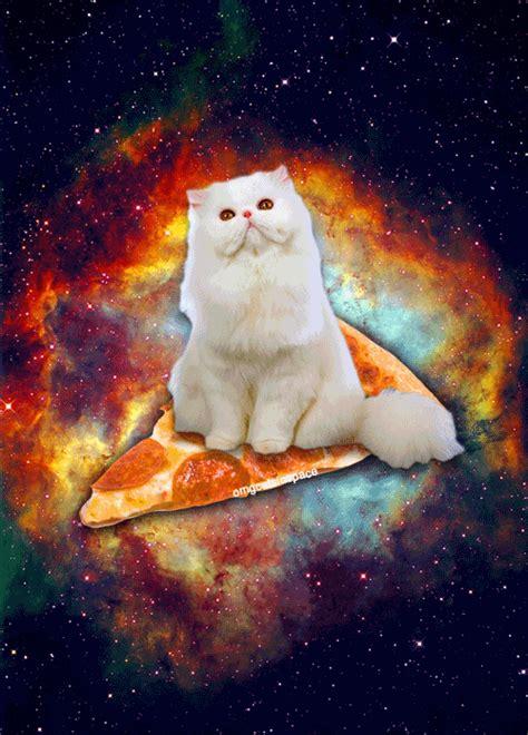 libro pizza kittens omgcatsinspace