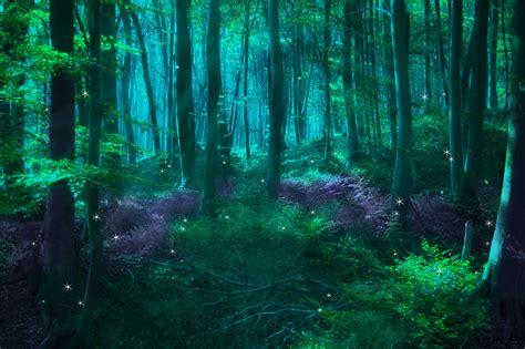 3d magical fairy forest magical forest fairies create an enchanted forest trees art