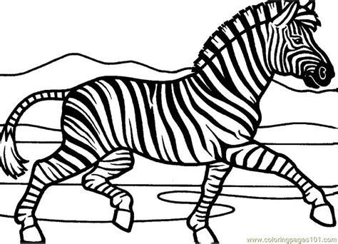 what color is a zebra zebra coloring page free zebra coloring pages
