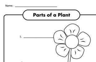 parts of a plant worksheet for k free science