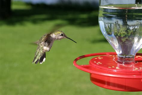 best 28 humming bird feeder solution color changing