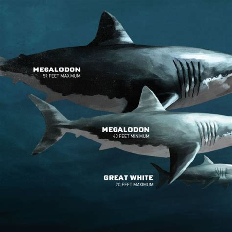 what is the largest great white shark ever recorded primer baby megalodon footage of the largest great white shark