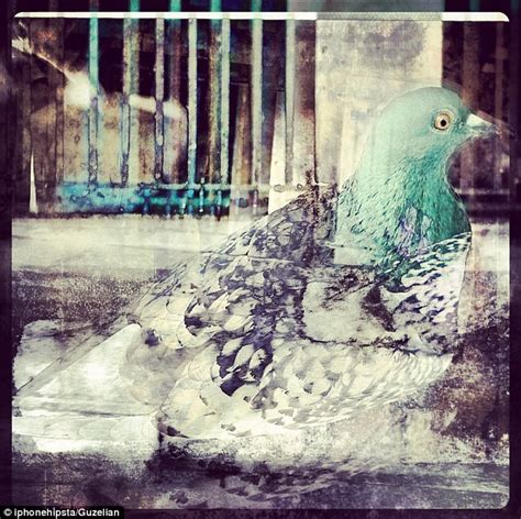 Somerset House Birth Records Colourful Feathers A Pigeon Encapsulates The City In This Clever And Images Frompo