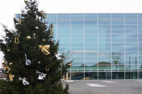 bauers weihnachtsbaum weihnachtsbaum paradiesbauer