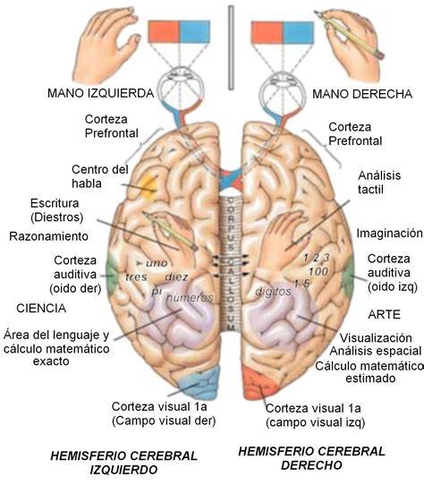 dos imagenes a pdf el cerebro generalidades de cerebro