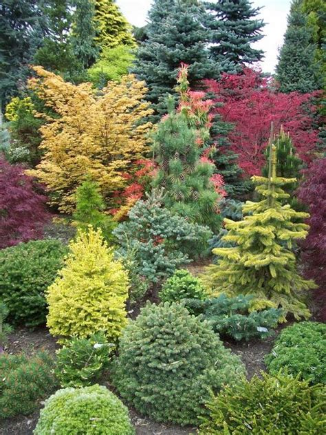 Landscape Ideas Using Evergreens Landscaping With Shrubs Bringing Shape And Color Into