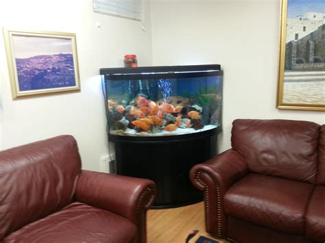 fish tank living room fish tank in living room images