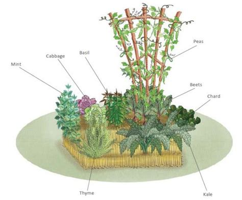 how to create a straw bale vegetable garden with just one