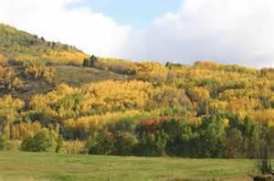 terrestrial vegetation