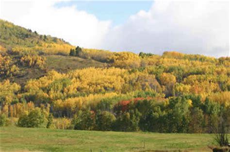 The Interior Plains Vegetation by Terrestrial Vegetation