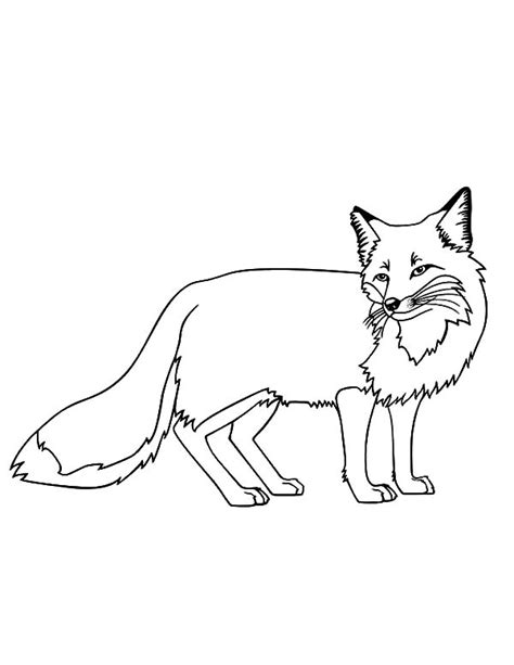 kit fox coloring page kit fox coloring pages coloring pages