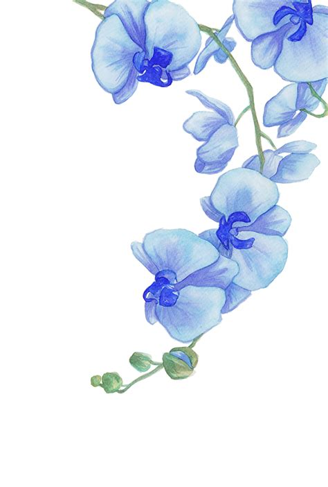 blue orchid 2 by cat o morphism on deviantart
